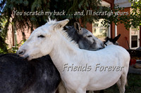 Donkeys Friends Forever